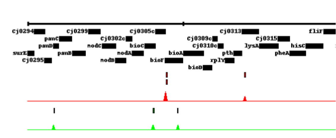 variation in the genome